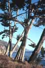 thumbnail of Leaning trees