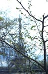 thumbnail of Eiffel Tower through tree, no. 3
